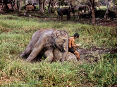 Steve McCurry: Animals - Aosta - dal 4 maggio al 6 ottobre